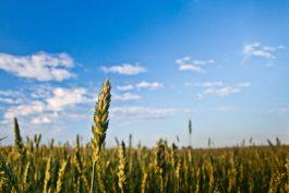 Anche le multinazionali sperimentano i social bond: Danone in campo nell'agro-alimentare